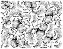 Fond tiré par la main des fruits frais d'Artocarpus Lacucha Illustration Stock