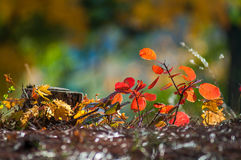 Fond très beau d'automne dans la forêt Images libres de droits