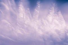 Fond très sensible des plumes aux nuances lilas Fond doucement lilas photographie stock