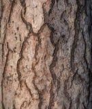 Fond tree2 de papier peint Images libres de droits