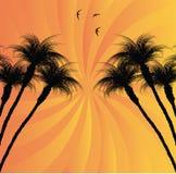 Fond tropical Photo libre de droits
