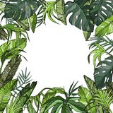 Fond tropical avec des palmettes, usines de jungle illustration libre de droits