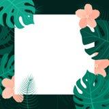 Fond tropical avec le cadre blanc Illus de vecteur de bannière d'été Photo stock