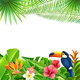 Fond tropical d'horizontal Photographie stock libre de droits