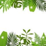 Fond tropical de feuilles avec des feuilles de paume, de fougère, de monstera, d'acacia et de banane Images stock
