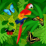 Fond tropical de jungle de forêt tropicale de vecteur sans couture avec le perroquet et les papillons illustration stock