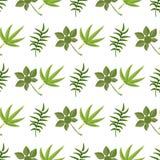 Fond tropical de palmettes de vert d'été de paume de modèle Photo stock