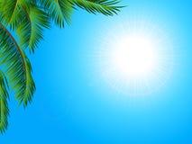 Fond tropical de paysage avec le palmier Image libre de droits