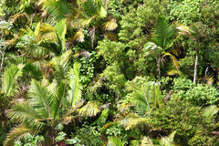 Fond tropical de végétation Photos libres de droits