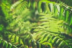 Fond tropical exotique avec les usines hawaïennes photo stock