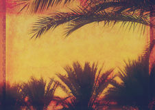 Fond tropical grunge avec des palmiers de noix de coco Images libres de droits