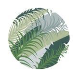 Fond tropical rond avec des palmettes Image de vecteur illustration de vecteur