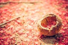 Fond tropical rouge naturel dans le style rustique avec de petites fleurs rouges sur la terre Images stock