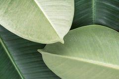 Fond tropical vert Photo libre de droits