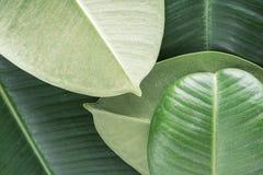 Fond tropical vert Images libres de droits