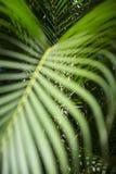 Fond tropical vert clair de fronde de paume images stock