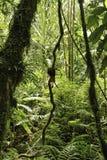 Fond tropical vert de jungle d'Amazone de forêt humide Photos stock