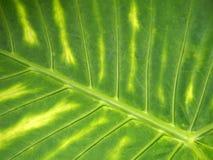 Fond tropical vibrant vert clair de feuille avec le modèle coloré rayé photographie stock