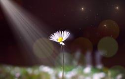 Fond trouble d'abrégé sur fleur photo stock