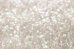 Fond Unfocused de fleur de tache floue Backdrope floral Beau champ de camomille dans le jour du soleil amorti Photographie stock libre de droits