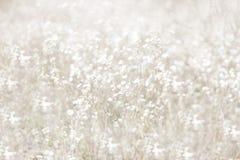 Fond Unfocused de fleur de tache floue Backdrope floral Beau champ de camomille dans le jour du soleil Ton amorti Photographie stock libre de droits