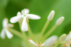 Fond Unfocused de fleurs de tache floue photographie stock