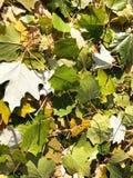 Fond unique - feuilles tombées vertes image libre de droits