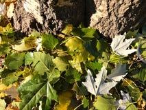 Fond unique - feuilles tombées vertes images libres de droits