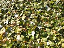 Fond unique - feuilles tombées vertes photographie stock libre de droits