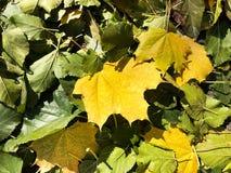 Fond unique - feuilles tombées vertes photographie stock