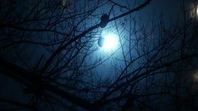 Fond urbain de ville de nuit dans le brouillard clips vidéos