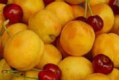 Fond végétatif lumineux des fruits mûrs des abricots et des merises Photographie stock