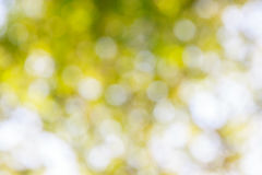 Fond vert abstrait ensoleillé de nature Photo stock