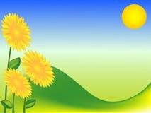 Fond vert avec des tournesols Image stock