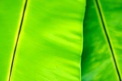 Fond vert brouillé de feuille photographie stock