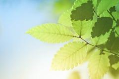 Fond vert d'été de feuille Image libre de droits