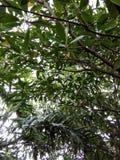 Fond vert d'arbre Photographie stock