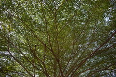 Fond vert d'arbre Photographie stock libre de droits