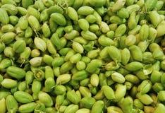 Fond vert d'haricot de pois chiche (pois chiche) Images stock