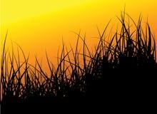 Fond vert d'herbe de vecteur illustration libre de droits