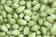 Fond vert d'houblon Image libre de droits