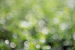 Fond vert de bokeh, bokeh vert, abrégé sur vert bokeh Images stock
