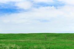Fond vert de champ Photos libres de droits