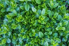 Fond vert de congé Image libre de droits