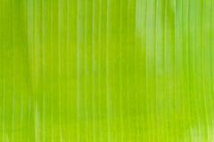 Fond vert de congé de banane photo libre de droits