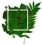Fond vert de feuillage Photos libres de droits