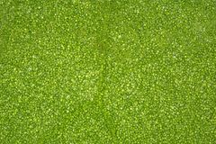 Fond vert de feuille de tr?fle photo stock