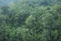 Fond vert de forêt Image stock