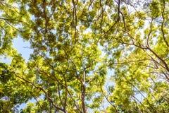 Fond vert de forêt Photos stock