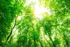 Fond vert de forêt images stock
